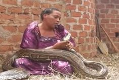 Ugandan Woman Claims to Give Birth to Twins Which One is a Big Python Snake (Photos) South African Hip Hop, Snake Photos, Latest Nigerian News, Hip Hop Songs, Python Snake, I Am The One, Losing You, Indie, Birth