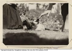 Virginia Woolf's cats, Sappho and Pluto. -- good names for literary cats.