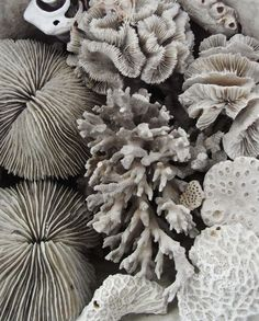 from under the sea / sea life / texture love / texture inspo / feathers / line art / shapes / colours / colour inspo / studio / Patterns In Nature, Textures Patterns, Kara Rosenlund, Fractal, Photocollage, Back To Nature, Ocean Life, Under The Sea, By The Sea