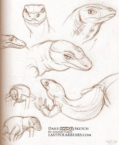 A somewhat workable fuck-ton of lizard references. Sourced by inxipe: Original source not found. Original source not found. Original source not found. How to Draw Lizards: Step 1 by. Animal Sketches, Animal Drawings, Art Drawings, Anatomy Reference, Drawing Reference, Life Drawing, Drawing Sketches, Les Reptiles, Illustration