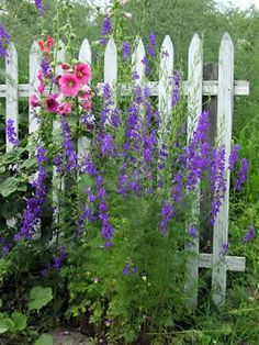 Larkspur by the gate. Shared by www.nwquiltingexpo.com #nwqe #garden
