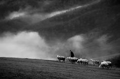 Ph. © Cemal Sepici - Bucolic