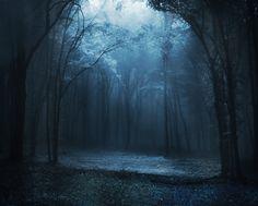 Resultados de la Búsqueda de imágenes de Google de http://s2.favim.com/orig/30/blue-fog-forest-gloomy-trees-Favim.com-246845.jpg