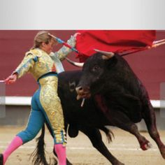 I am The Bull. Unfortunately, Kellie is The Matador Bucking Bulls, Flamenco Dancers, Cattle, Wildlife, Mexico, Horses, Female, Lady, Animals