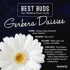 Bouquet Inspiration: Everything you need to know about Gerbera daisies || Lover.ly