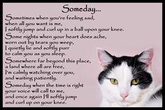 Beautiful Black and White Cat Memorial Pet Loss Bereavement Rainbow Bridge Fridge Magnet plaque gift Westies, Pet Poems, Pet Loss Grief, Pet Remembrance, Losing A Pet, Losing A Cat Quote, Cat Memorial, Tier Fotos, Bereavement