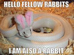Undercover Snake