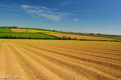 Fields at Trescowe, near Pencarrow House, Cornwall