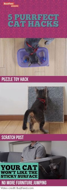 Love these easy do it yourself cat hacks! #cats #diy