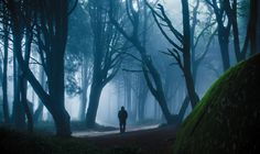 8 Reasons Why You Have To Visit Sintra In Portugal! - Hand Luggage Only… Forest Sunset, Misty Forest, Dark Forest, Best Wallpapers Android, Forest People, Mystical Forest, Renaissance Architecture, Sintra Portugal, Ocean Photography