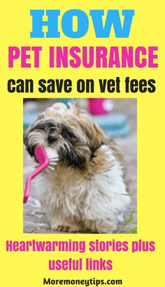 What are the best ways to save money when you have pets? Discover real stories of pet owners and how they handle unexpected pet emergencies.Useful links are provided too. Ways To Save Money, Money Tips, Money Saving Tips, How To Make Money, Managing Money, Pet Insurance Reviews, Best Insurance, Budgeting Tips, Personal Finance