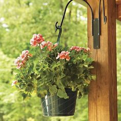 If you plant your own hanging baskets, some of the best flowers to include are the moss rose (Portulaca grandiflora), marigold (Tagetes tenuifolia), petunias, alyssum, nasturtiums and ivy-leaf geranium. Herbs of all sorts do well in hanging baskets, but especially basil, trailing rosemary and parsley. Click http://capegazette.villagesoup.com/p/hanging-baskets-add-color-and-form-to-garden/1204969 to read gardening article: Hanging baskets add color and form to garden by Paul Barbano