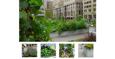 ASLA 2012 Professional Awards | Lafayette Greens: Urban Agriculture, Urban Fabric, Urban Sustainability