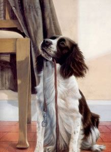 Anticipation - Springer Spaniel by Nigel Hemming