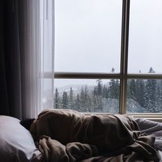 a warm bed, a warm person, the cold outdoors with fog and dark green trees