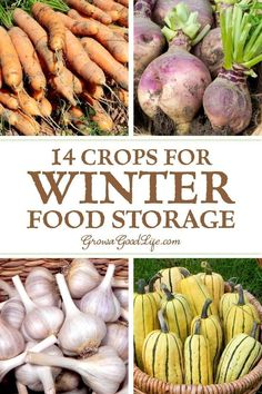 14 Crops for Winter Food Storage You don't need a root cellar to keep storage crops in winter. A basement maintains a steady temperature and is usually cooler than the rest of the house. Consider any location that stays above freezing through the fall and Winter Vegetables, Growing Vegetables, Fruits And Veggies, Root Veggies, Container Gardening, Gardening Tips, Organic Gardening, Kitchen Gardening, Sustainable Living