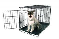 Carlson Secure and Compact Single Door Metal Dog Crate, Medium  | eBay