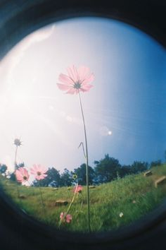Fish eye photography. i like how this has selective focus, the flowers bent which makes it look like the wind is blowing.  repinned by nicole pospiech