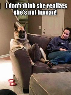 Wow we bet she dont realizes shes not human, funny dogs, cute dogs. You can create awesom funny dog memes out of them. Funny Dog Memes, Funny Animal Memes, Cute Funny Animals, Funny Animal Pictures, Funny Cute, Funny Dogs, Animal Pics, Random Pictures, Cat Memes
