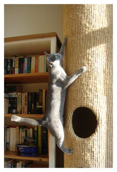 hicat-cat-climber-scratcher-tree-house-tower-post-g05b #unique - More at Catsincare.com!
