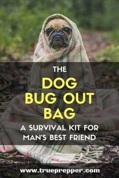 The Dog Bug Out Bag A Survival Kit for Mans Best Friend Even Fido could use a bug out bag. Whether you are starting a survival kit for your dog, or turning your kit with everything your pupper needs- this guide will help you out. Wilderness Survival, Camping Survival, Survival Prepping, Survival Skills, Emergency Preparedness, Survival Hacks, Emergency Kits, Survival Stuff, Survival Shelter