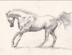 Showing Off Poster By Callie Smith Horse Pencil Drawing, Horse Drawings, Realistic Drawings, Animal Drawings, Creature Drawings, Horse Sculpture, Animal Sketches, Equine Art, Dragon Art