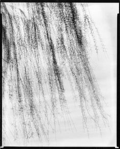 Harry Callahan: Nature Abstracted