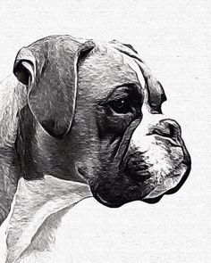 Boxer B/W without cropped ears painted in by AnimalArtIncognito Boxer Breed, Boxer Puppies, Chihuahua Dogs, Pet Dogs, Pets, Name Drawings, Badass Drawings, Animal Sketches, Animal Drawings