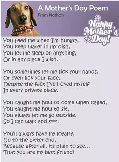 Mothers Day from animal