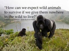 SO TRUE..THEN THEY WANT TO KILL A WILD ANIMAL CUZ IT COMES INTO YOUR NEIGHBORHOOD..SERIOUSLY..STUPID.