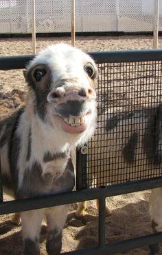 <b>Sorrisos de animais > todos os outros sorrisos.</b>