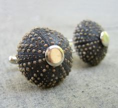 Wow. Sea urchins! Can't beat nature's attention to detail. $44.00