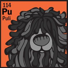 Puli in a dog periodic table Hungarian Puli, Puli Dog, Dog Table, Goofy Dog, Pet Bag, Bearded Collie, Herding Dogs, Dog Show, Doge