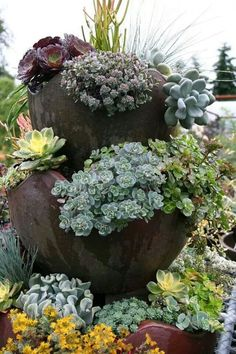 Succulent beauty