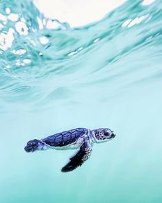 5 tips for a relaxed flight Best photos, images, and pictures gallery about baby sea turtle - sea turtle facts. Tier Wallpaper, Animal Wallpaper, Sea Turtle Wallpaper, Wallpaper Art, Trendy Wallpaper, Sea Turtle Facts, Cute Baby Turtles, Turtle Baby, Save The Sea Turtles