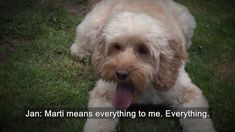 What does a hearing dog do?
