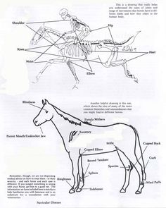 Sound or unsound?  And what is considered a blemish in a horse?