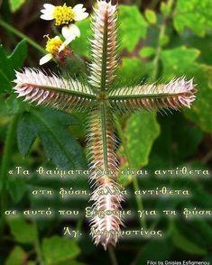 Dandelion, Flowers, Plants, Greece, Dandelions, Plant, Taraxacum Officinale, Royal Icing Flowers, Flower
