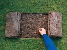 Going to try! Plant Bulbs in Grass - Planting Bulbs : HGTVGardens Garden Bulbs, Planting Bulbs, Garden Yard Ideas, Garden Projects, Garden Cottage, Garden Pests, Garden Planning, Dream Garden, Garden Inspiration