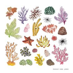 Corals of the Caribbean Sea by Sanny van Loon | Illustration | www.sannyvanloon.com