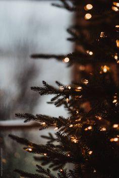wallpaper winter Christmas tree by Melanie DeFazio for Stocksy United