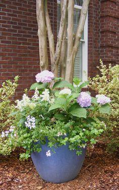 1000 Images About Garden Ideas On Pinterest Courtyard