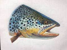 Brown trout colored pencil