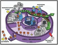 teaching biology Love this drawing! A simplified illustration of cell metabolism, depicting the cell as a factory. Biology Classroom, Biology Teacher, Cell Biology, Ap Biology, Science Biology, Science Humor, Science Education, Forensic Science, Biology Drawing