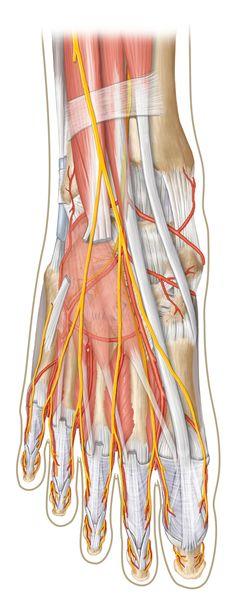 see_thru_foot_anatomy.jpg
