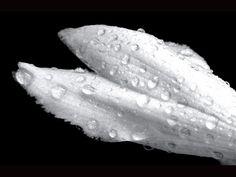 White Raindrops Again by Kathleen Mendel