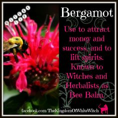 love Bee Balm and have in several places in my garden