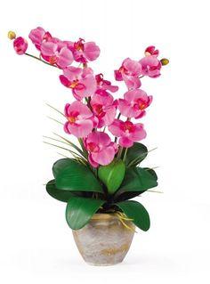 Orchidea.