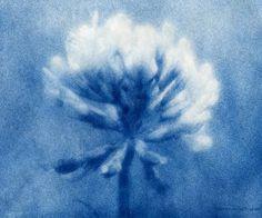 Cyanotype. Nicholas linden.