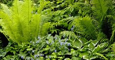 Im Schatten wächst nichts? Von wegen! Es gibt überraschend viele Möglichkeiten, schattige Gartenecken zu gestalten.